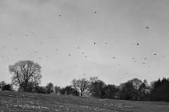high birds